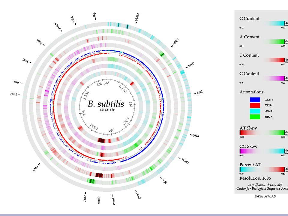 11 Bacillus subtilus Base Atlas