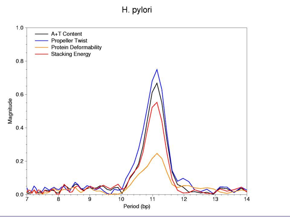 17 H.pylori DNA Periodicity