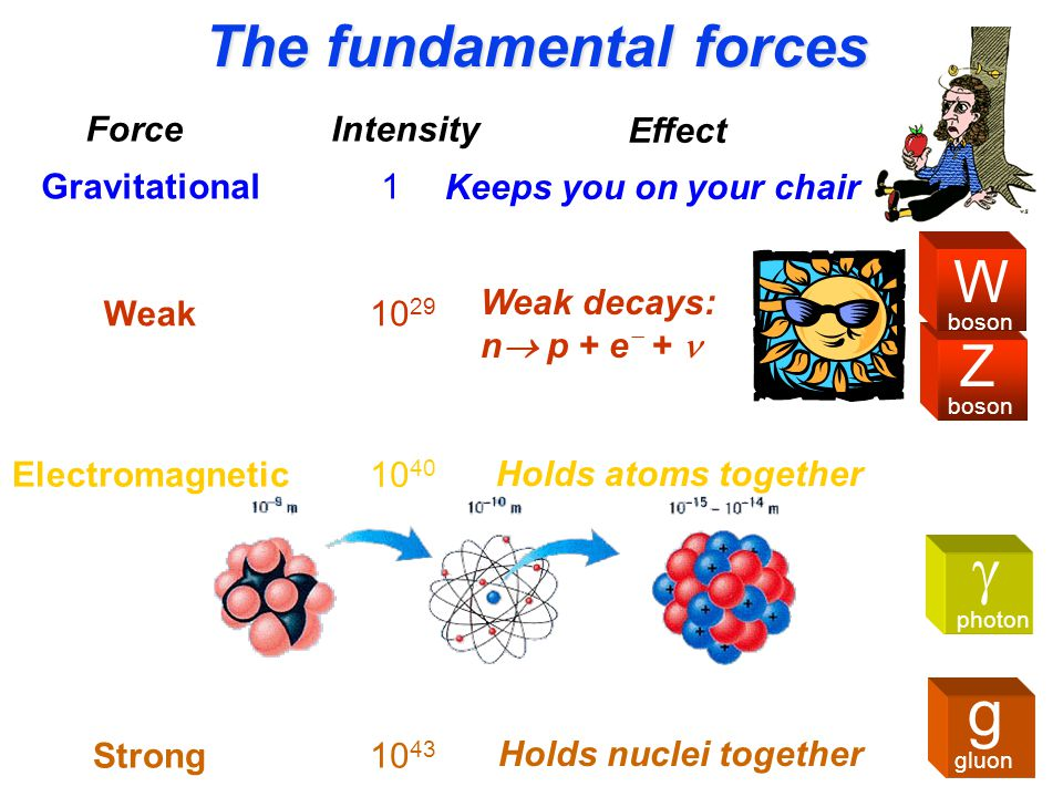 The fundamental forces ForceIntensity Weak10 29 Weak decays: n  p + e  + Electromagnetic 10 40 Holds atoms together Strong10 43 Holds nuclei together Gravitational1 Keeps you on your chair Effect Z boson W  photon g gluon