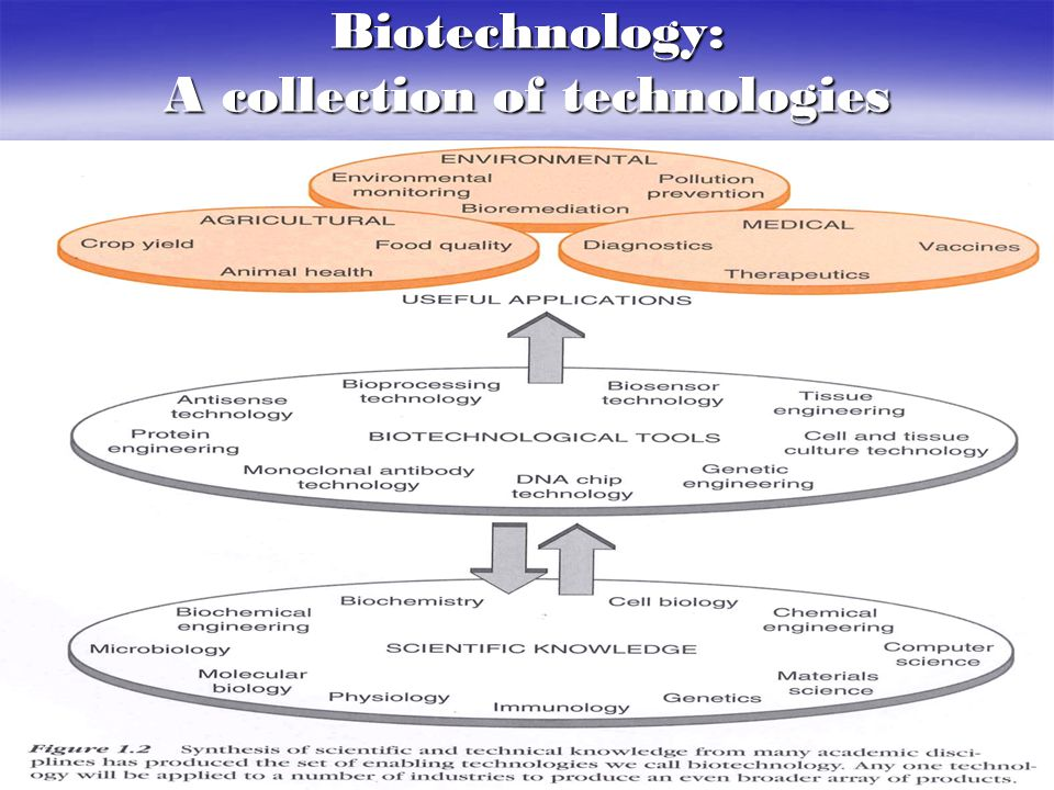 The Applications of Biotechnology  Medical Biotechnology  Diagnostics  Therapeutics  Vaccines  Agricultural Biotechnology  Plant agriculture  Animal production  Food processing  Environmental Biotechnology Cleaning through bioremediation Cleaning through bioremediation Preventing environmental problems Preventing environmental problems Monitoring the environment Monitoring the environment