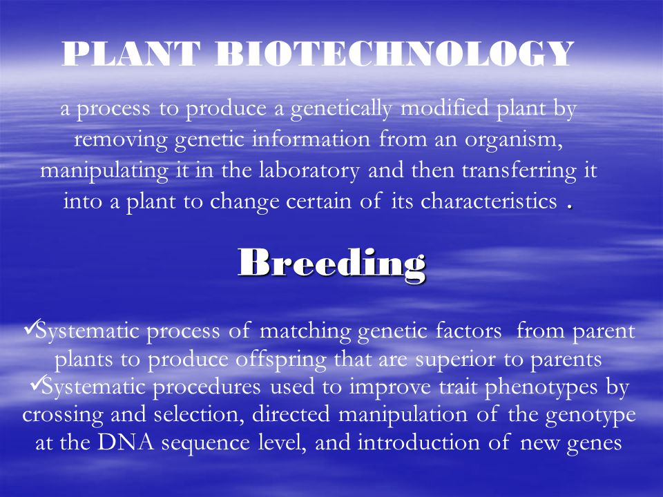 Desired gene Traditional plant breeding DNA is a strand of genes, much like a strand of pearls.