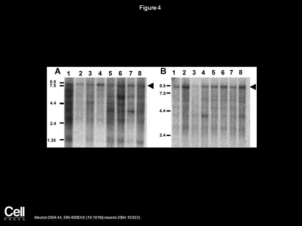 Figure 4 Neuron 2004 44, 595-600DOI: (10.1016/j.neuron.2004.10.023)