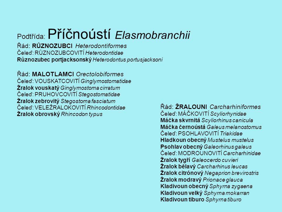 Řád: OBROUNI Lamniformes Čeleď: PÍSEČNÍKOVITÍ Odontaspidae, Carchariidae Žralok písečný Eugomphurus (Odontaspius) taurus Čeleď: HLAVOROHOVITÍ Mitsukirinidae, Scapanorhychidae Žralok šotek Mitsukurina owstoni Čeleď: VELKOTLAMOVITÍ Megachasmidae Žralok velkoústý Megachasma pelagios Čeleď: LIŠKOUNOVITÍ Alopiidae Liškoun obecný Alopias vulpinus Čeleď: OBROUNOVITÍ Cetorhinidae Žralok veliký Cetorhinus maximus Čeleď: MAKRELCOVITÍ Lamnidae Žralok bílý Carcharodon carcharias Žralok nosatý Lamna nasus Žralok mako Isurus oxyrinchus Řád: ŠEDOUNI Hexanchiformes Čeleď: ŠTÍHLOUNOVITÍ Chlamydoselachidae Žralok límcový Chlamydoselachus anguineus Čeleď: ŠEDOUNOVITÍ Hexanchidae Žralok šedý Hexanchus griseus Žralok sedmižábrý Heptranchias perlo Řád: OSTROUNI Squaliformes Čeleď: DRSNOTĚLCOVITÍ Echinorhinidae Žralok trnitý Echinorhinus brucus Čeleď: SVĚTLOUNOVITÍ Dalatiidae Žralok malohlavý Somniosus microcephalus Žraloček brazilský Isistius brasiliensis Žralok ostnatý Oxynotus centrina Čeleď: OSTROUNOVITÍ Squalidae Ostroun obecný Squalus acanthias