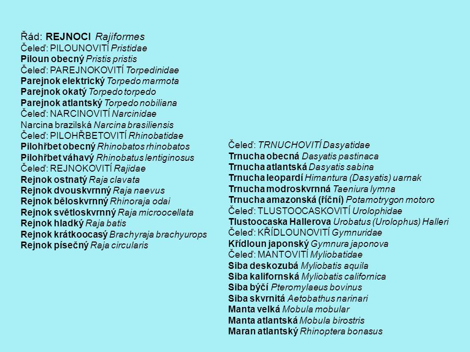 REJNOCI TRNUCHOVITÍ Trnucha obecná Trnucha atlantská Trnucha leopardí Trnucha modroskvrnná Trnucha amazonská (říční) TLUSTOOCASKOVITÍ Tlustoocaska Hallerova KŘÍDLOUNOVITÍ Křídloun japonský