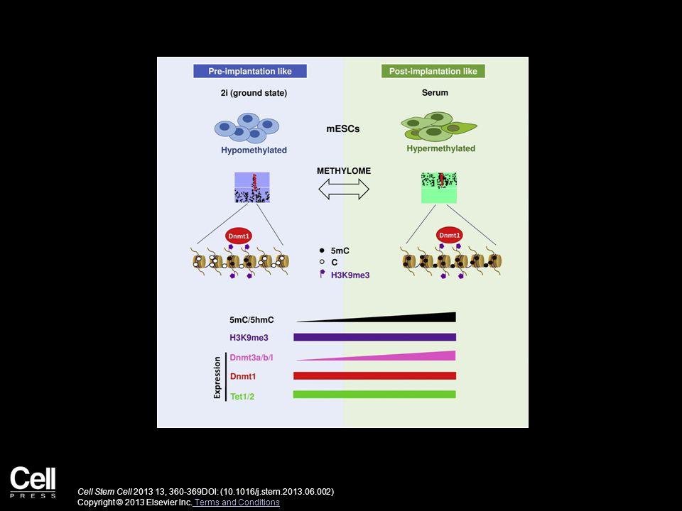 Cell Stem Cell 2013 13, 360-369DOI: (10.1016/j.stem.2013.06.002) Copyright © 2013 Elsevier Inc. Terms and Conditions Terms and Conditions