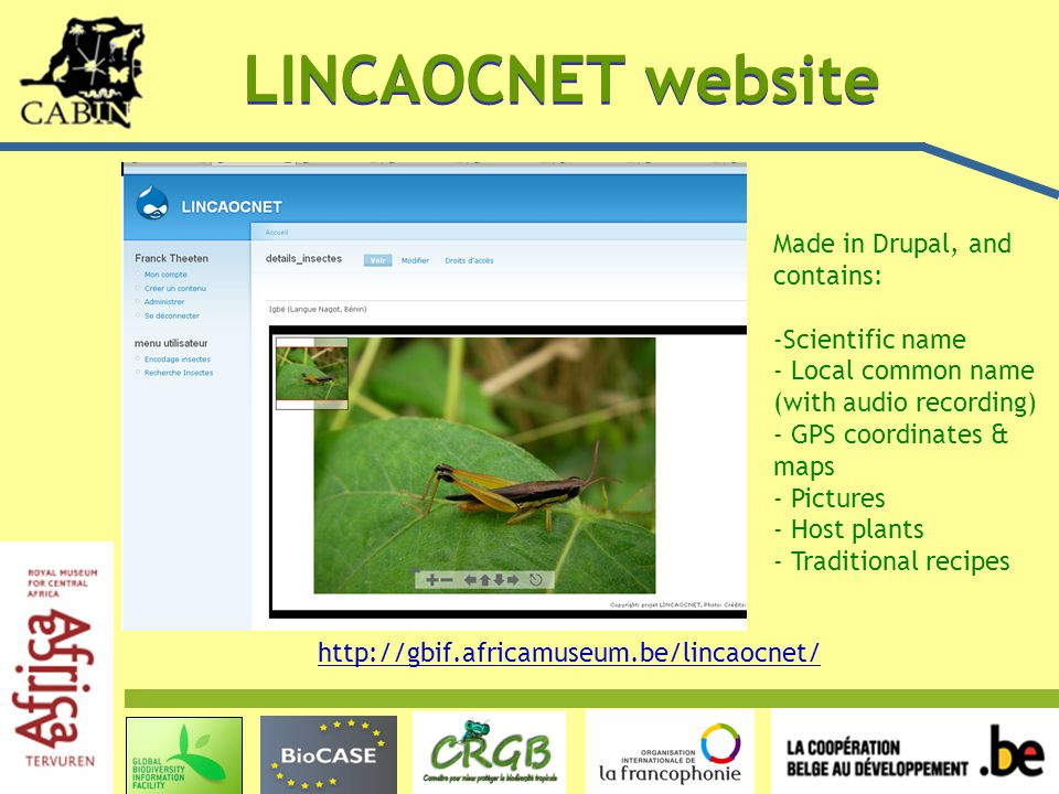 LINCAOCNET website http://gbif.africamuseum.be/lincaocnet/ Made in Drupal, and contains: -Scientific name - Local common name (with audio recording) - GPS coordinates & maps - Pictures - Host plants - Traditional recipes