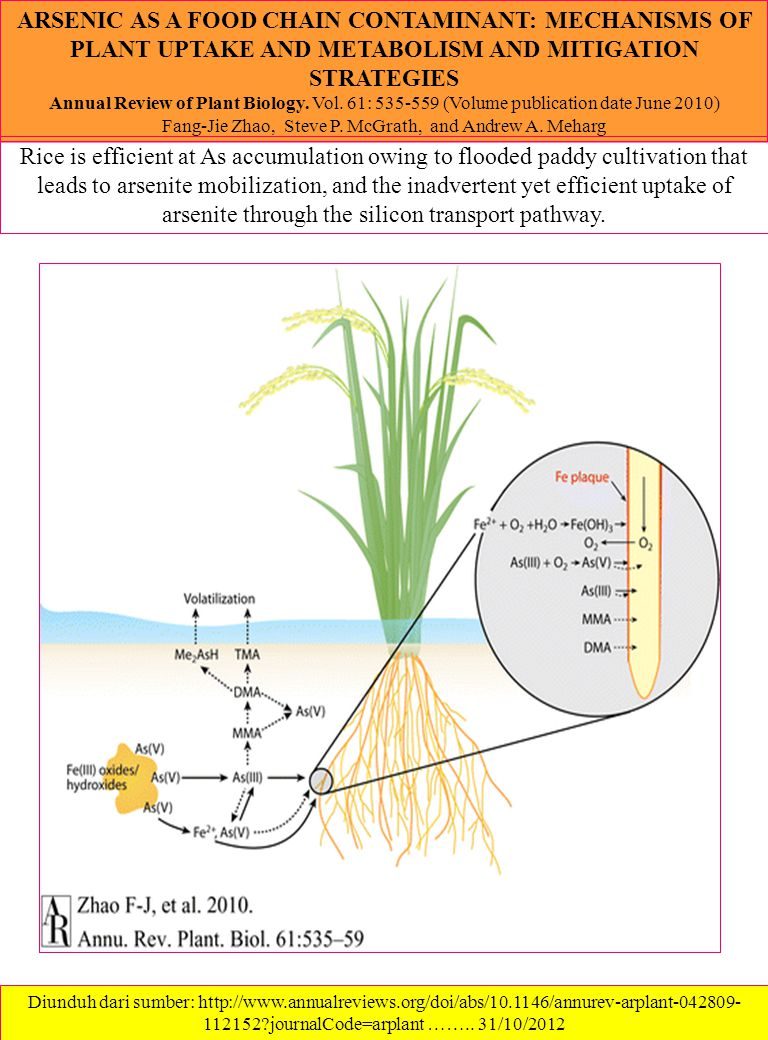 ARSENIC AS A FOOD CHAIN CONTAMINANT: MECHANISMS OF PLANT UPTAKE AND METABOLISM AND MITIGATION STRATEGIES Annual Review of Plant Biology.