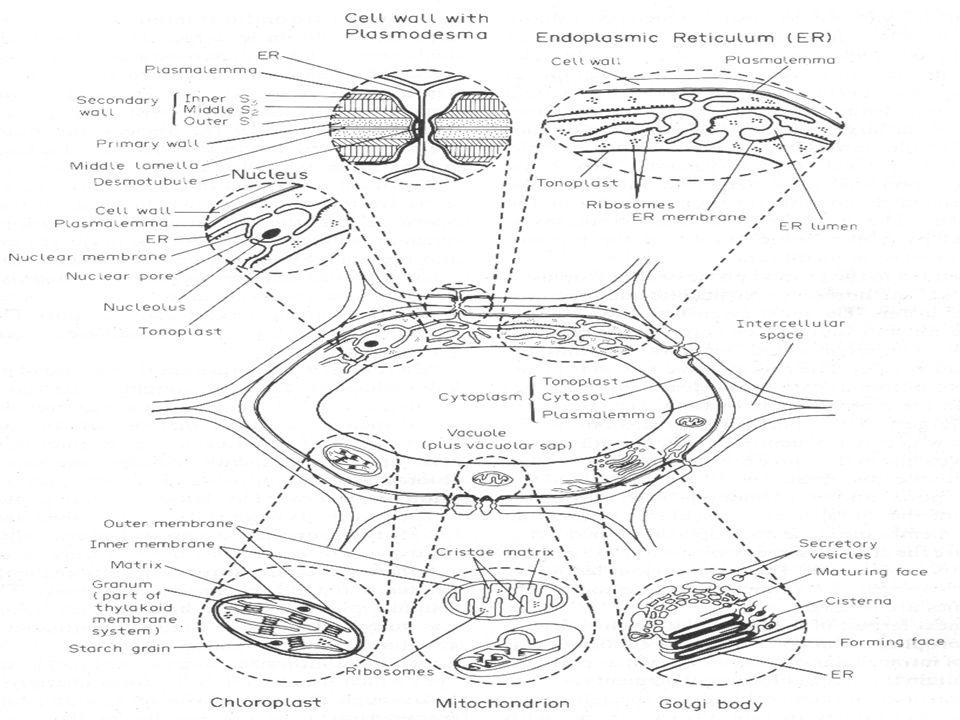 Genetic Inheritance & DNA