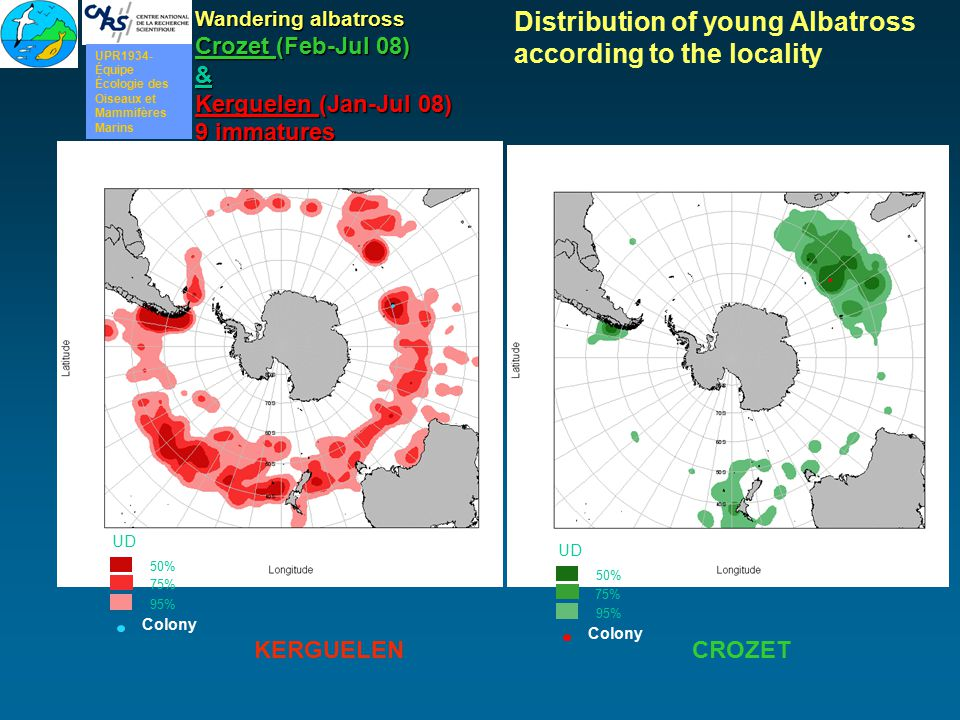 Wandering albatross Crozet (Feb-Jul 08) & Kerguelen (Jan-Jul 08) 9 immatures 50% UD 95% 75% Colony 50% UD 95% 75% Colony Distribution of young Albatro