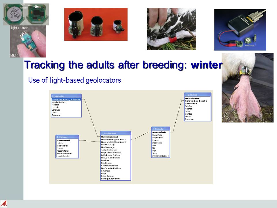 Tracking the adults after breeding: winter Use of light-based geolocators