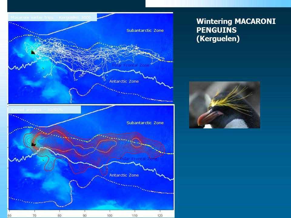 Subantarctic Zone Polar Frontal Zone Antarctic Zone Kernel analysis – 50/95% Subantarctic Zone Antarctic Zone Macaroni winter trips – Kerguelen 2006 P