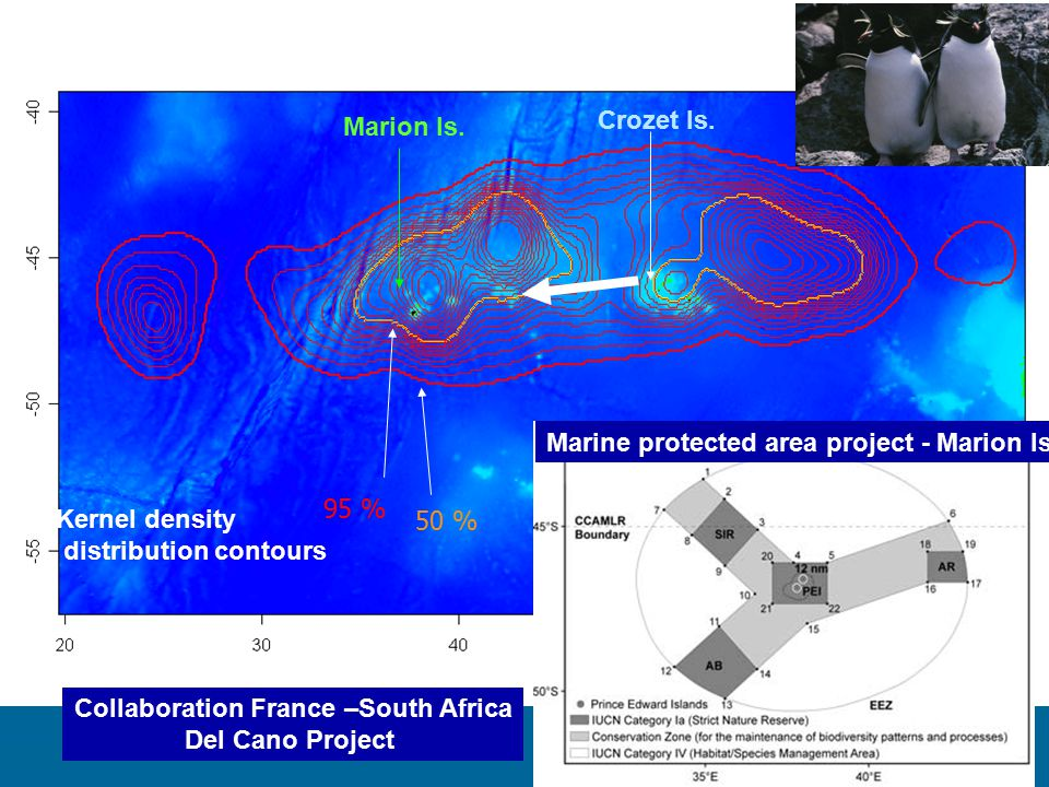 Crozet Is. Marion Is. Kernel density distribution contours 50 % 95 % Marine protected area project - Marion Is. Collaboration France –South Africa Del