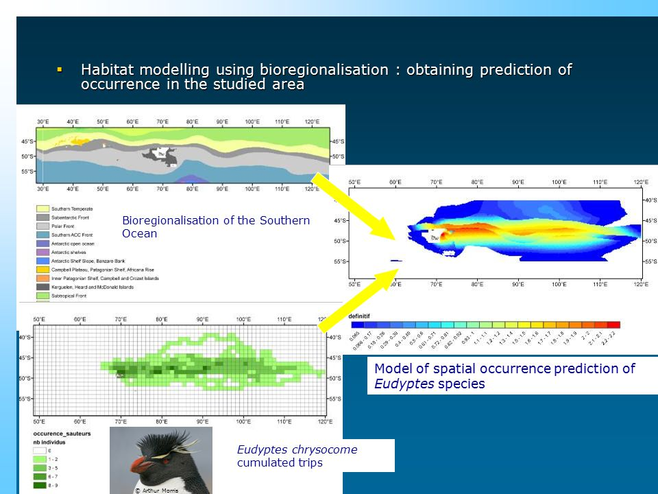 Bioregionalisation of the Southern Ocean (WWF, Hobart 2006) Eudyptes chrysocome cumulated trips Model of spatial occurrence prediction of Eudyptes spe