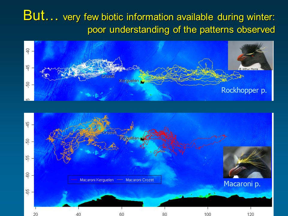 But… very few biotic information available during winter: poor understanding of the patterns observed Kerguelen Crozet © Arthur Morris Kerguelen Croze