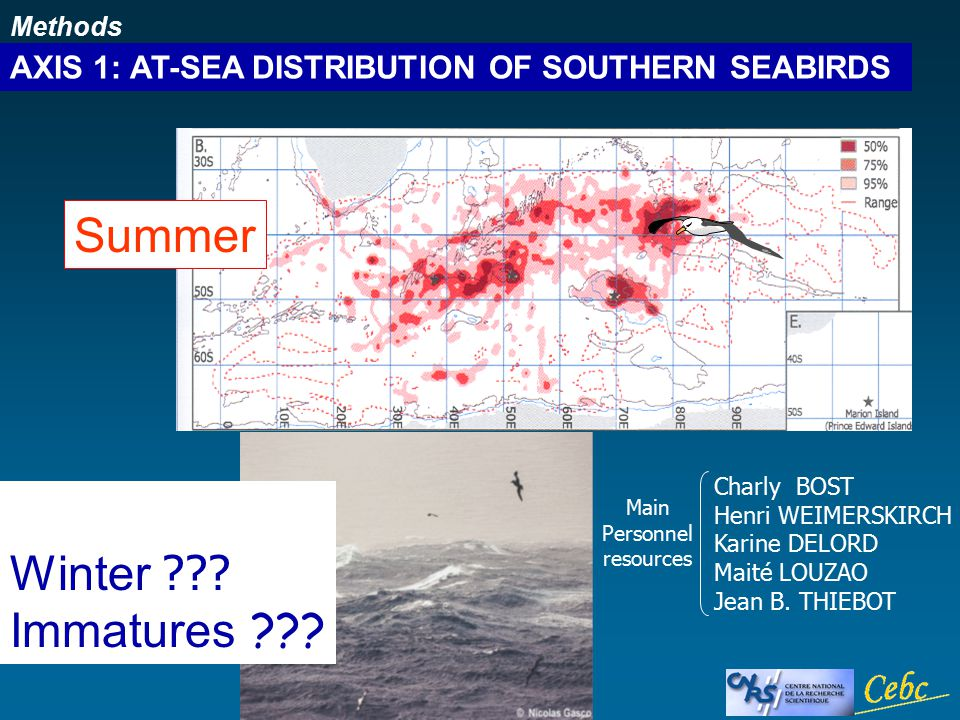 Methods AXIS 1: AT-SEA DISTRIBUTION OF SOUTHERN SEABIRDS Summer Winter .