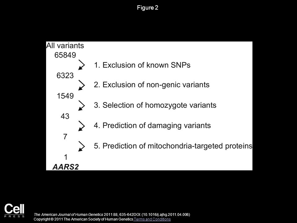 Figure 2 The American Journal of Human Genetics 2011 88, 635-642DOI: (10.1016/j.ajhg.2011.04.006) Copyright © 2011 The American Society of Human Genetics Terms and Conditions Terms and Conditions