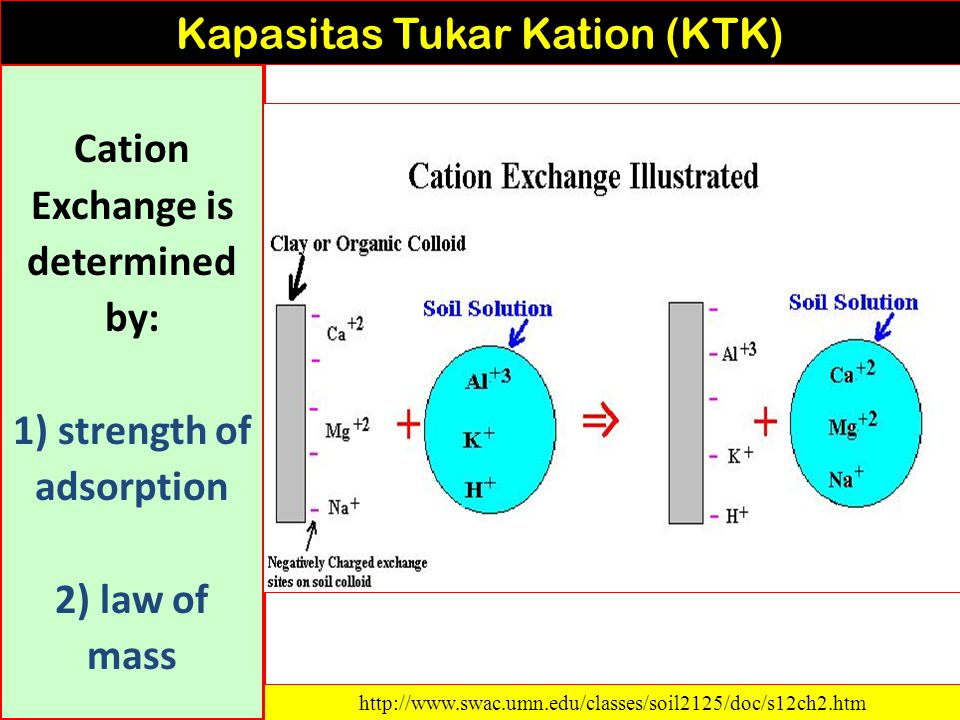 6 mEq/100g bases 10 mEq/100g sites = 60 % base saturation Kapasitas Tukar Kation (KTK) http://www.spectrumanalytic.com/support/library/ff/CEC_BpH_and_