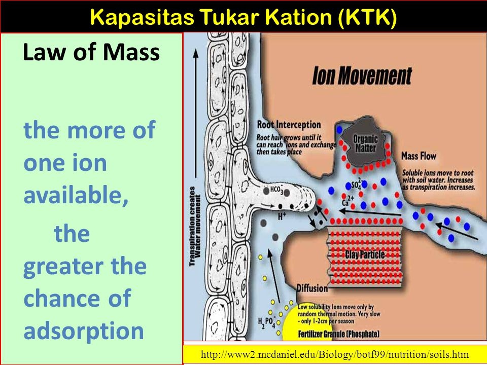 Strength of adsorption is as follows: H + and Al 3+ > Ca 2+ > Mg 2+ > K + > NH 4+ > Na + Kapasitas Tukar Kation (KTK) http://www2.mcdaniel.edu/Biology