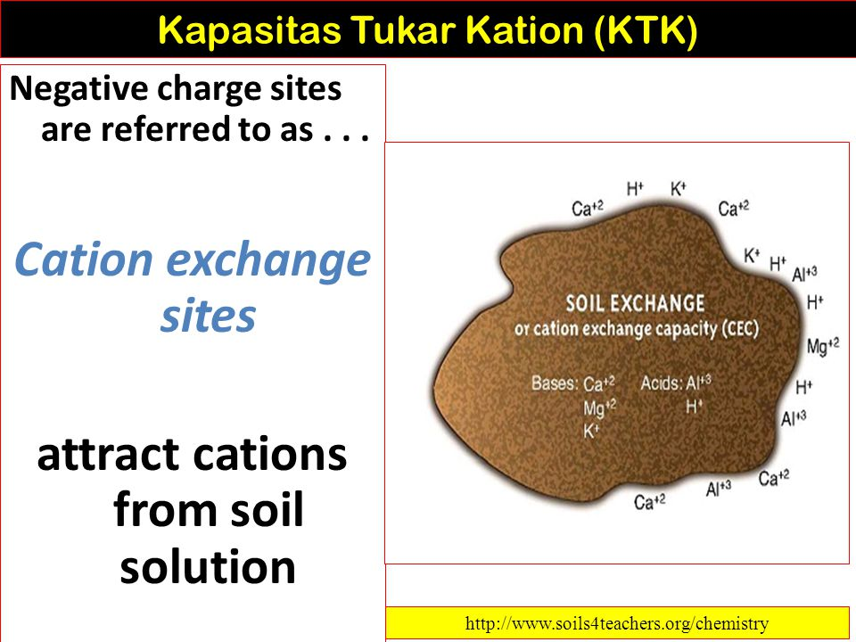 Kapasitas Tukar Kation (KTK) Clay Particles dan Humus 1.affect chemical properties of soil 2.complex structures with many negative charge sites 3.nega