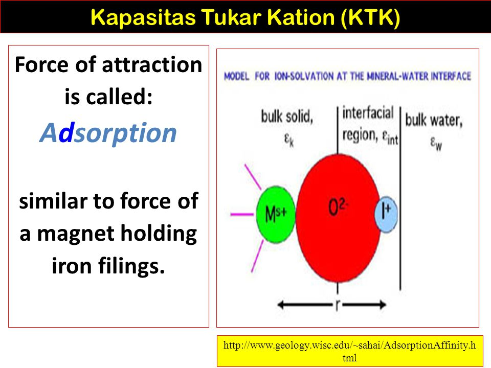 Cation Exchange is determined by: 1) strength of adsorption 2) law of mass Kapasitas Tukar Kation (KTK) http://www.swac.umn.edu/classes/soil2125/doc/s12ch2.htm