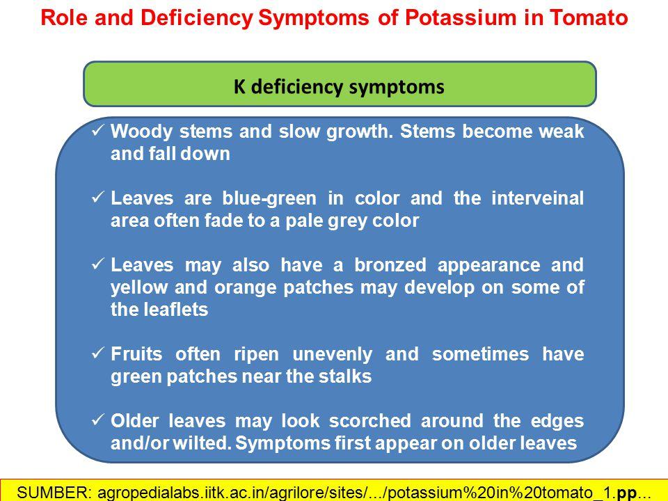 Gejala defisiensi K pada daun Source: http://5e.plantphys.net/article.php?ch=t&id=289 SUMBER: agropedialabs.iitk.ac.in/agrilore/sites/.../potassium%20in%20tomato_1.pp... Peranan & Defisiensi K dalam Tomat
