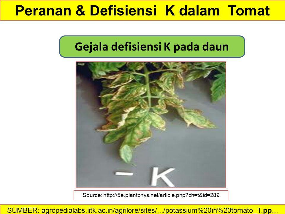 Defisiensi K buah tomat Source:http://extension.umass.edu/vegetable/diseases/tomato-blotchy-ripening Peranan & Defisiensi K dalam Tomat SUMBER: agropedialabs.iitk.ac.in/agrilore/sites/.../potassium%20in%20tomato_1.pp...