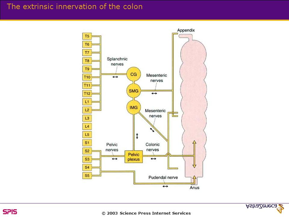 © 2003 Science Press Internet Services The extrinsic innervation of the colon