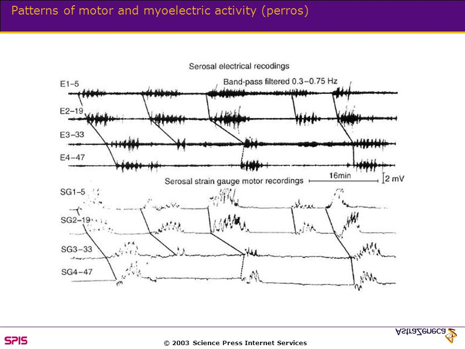 © 2003 Science Press Internet Services Patterns of motor and myoelectric activity (perros)