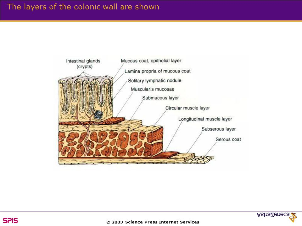 © 2003 Science Press Internet Services The colon exhibits a net secretion of potassium