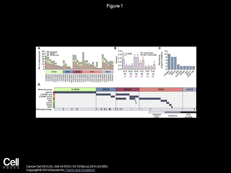 Figure 2 Cancer Cell 2014 25, 428-441DOI: (10.1016/j.ccr.2014.03.005) Copyright © 2014 Elsevier Inc.