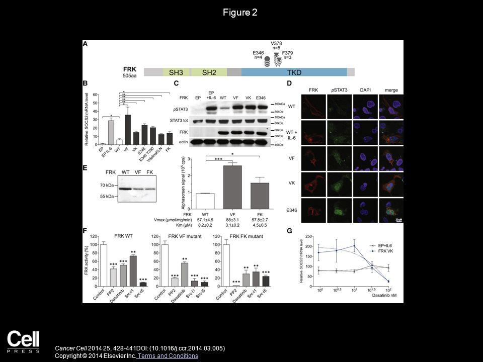 Figure 3 Cancer Cell 2014 25, 428-441DOI: (10.1016/j.ccr.2014.03.005) Copyright © 2014 Elsevier Inc.