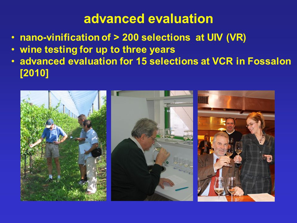 advanced evaluation nano-vinification of > 200 selections at UIV (VR) wine testing for up to three years advanced evaluation for 15 selections at VCR in Fossalon [2010]
