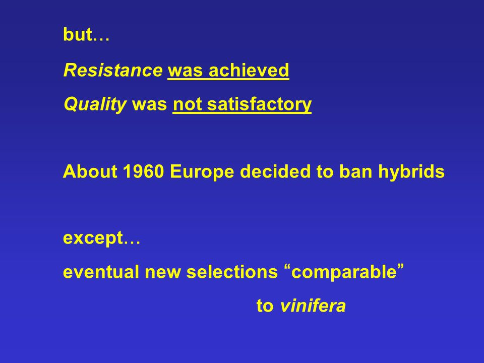 but … Resistance was achieved Quality was not satisfactory About 1960 Europe decided to ban hybrids except … eventual new selections comparable to vinifera
