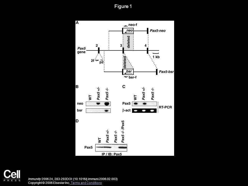Figure 1 Immunity 2006 24, 283-293DOI: (10.1016/j.immuni.2006.02.003) Copyright © 2006 Elsevier Inc. Terms and Conditions Terms and Conditions