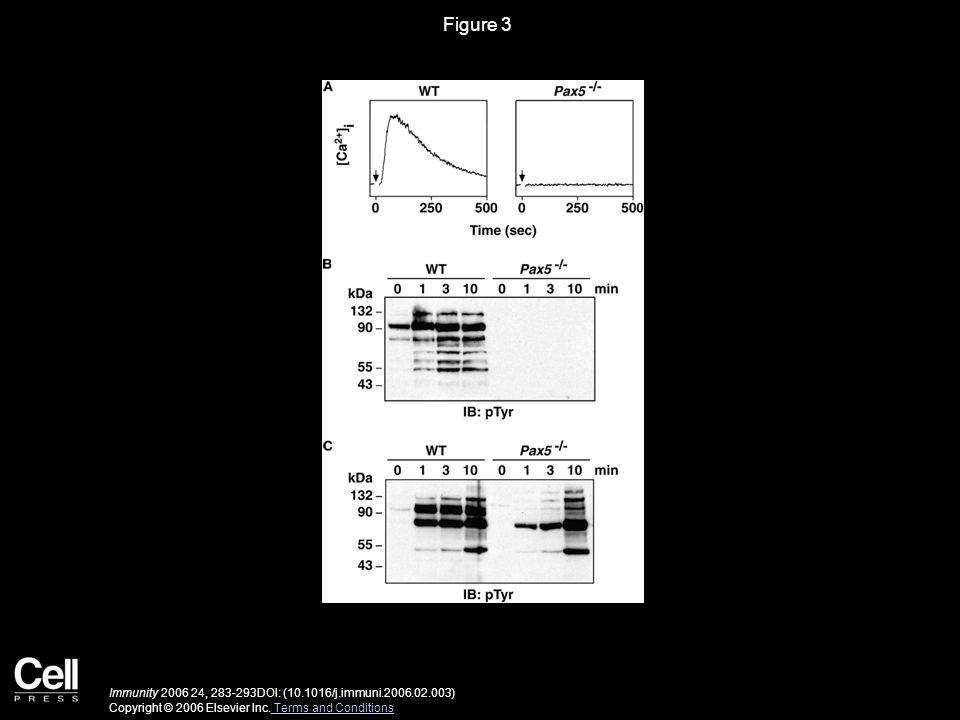 Figure 3 Immunity 2006 24, 283-293DOI: (10.1016/j.immuni.2006.02.003) Copyright © 2006 Elsevier Inc. Terms and Conditions Terms and Conditions