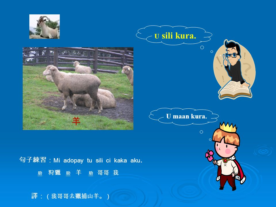 U maan kura. U sili kura. 句子練習: Mi adopay tu sili ci kaka aku. 助 狩獵 助 羊 助 哥哥 我 譯: (我哥哥去獵捕山羊。) 羊