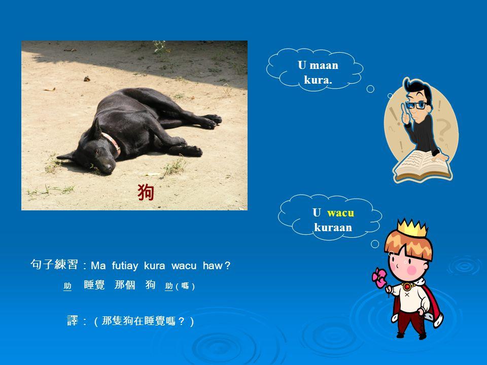 U wacu kuraan U maan kura. 句子練習: Ma futiay kura wacu haw ? 助 睡覺 那個 狗 助(嗎) 譯: (那隻狗在睡覺嗎?) 狗