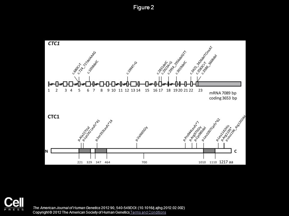 Figure 2 The American Journal of Human Genetics 2012 90, 540-549DOI: (10.1016/j.ajhg.2012.02.002) Copyright © 2012 The American Society of Human Genetics Terms and Conditions Terms and Conditions
