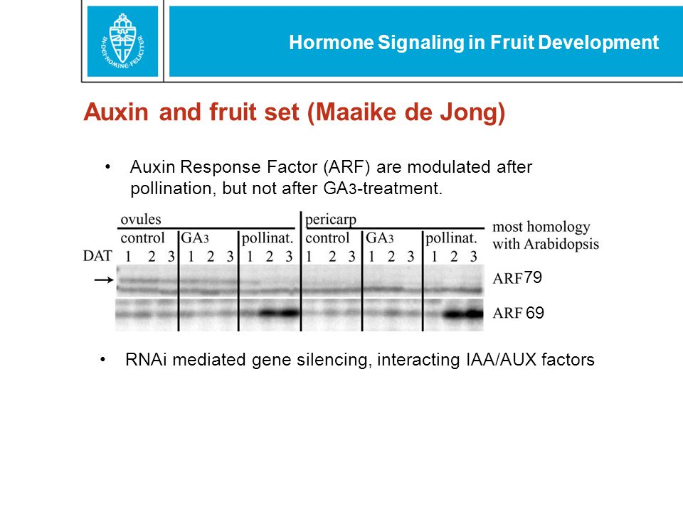 Auxin Response Factor (ARF) are modulated after pollination, but not after GA 3 -treatment.
