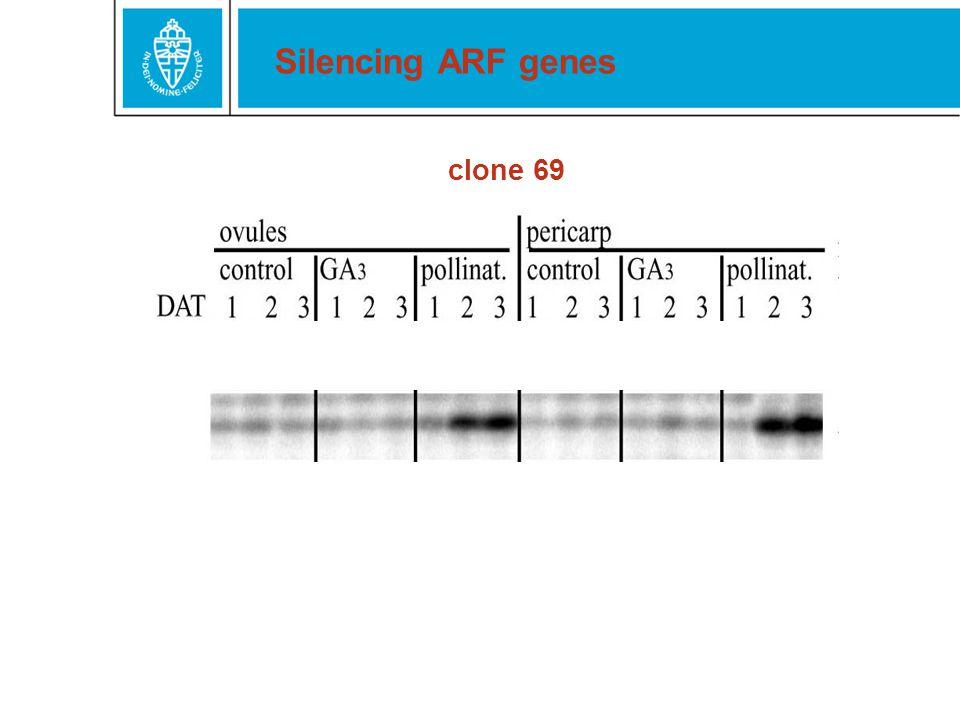 Silencing ARF genes clone 69