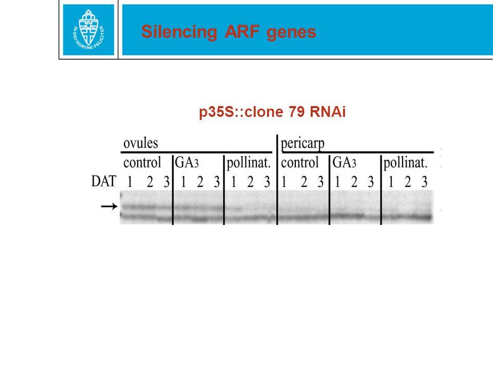 Silencing ARF genes p35S::clone 79 RNAi