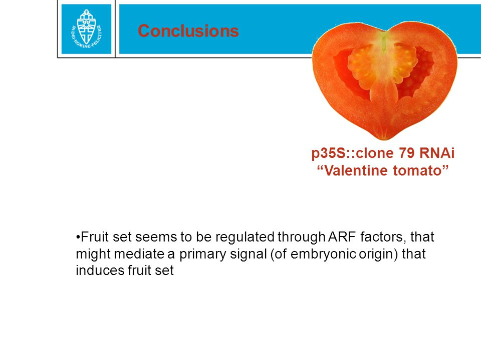 p35S::clone 79 RNAi Valentine tomato Conclusions Fruit set seems to be regulated through ARF factors, that might mediate a primary signal (of embryonic origin) that induces fruit set