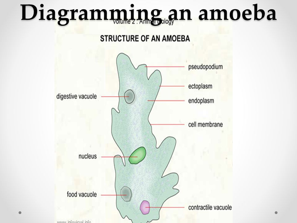 Diagramming an amoeba