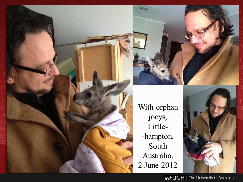 With orphan joeys, Little- -hampton, South Australia, 2 June 2012