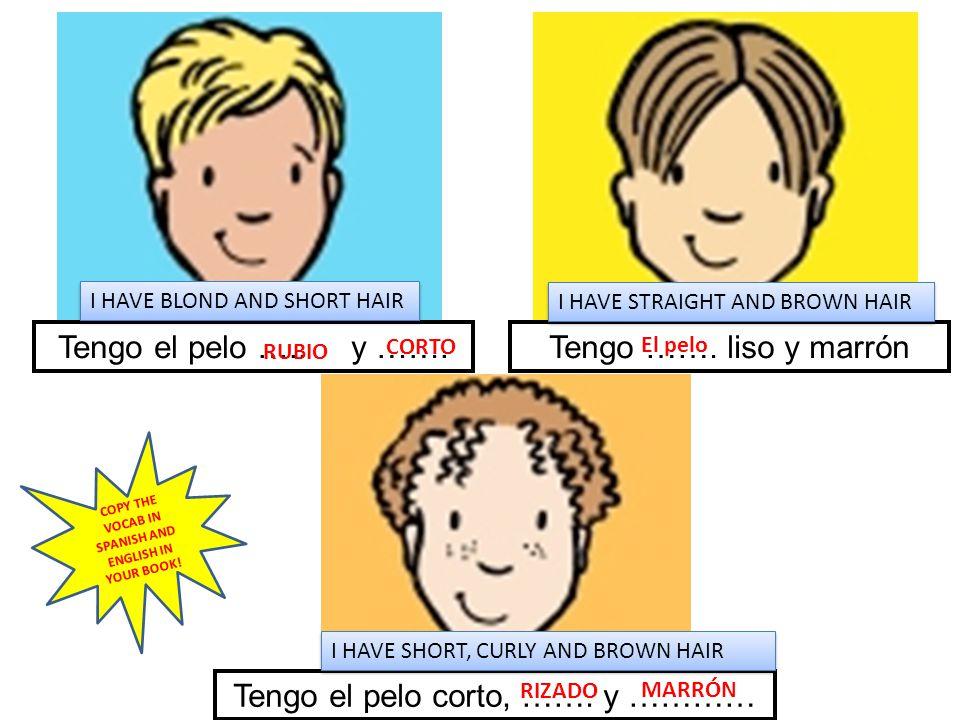 Tengo el pelo ….. y …….Tengo ……. liso y marrón Tengo el pelo corto, ……. y ………… I HAVE BLOND AND SHORT HAIR I HAVE STRAIGHT AND BROWN HAIR I HAVE SHORT