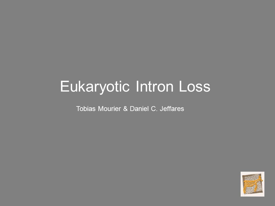 Eukaryotic Intron Loss Tobias Mourier & Daniel C. Jeffares
