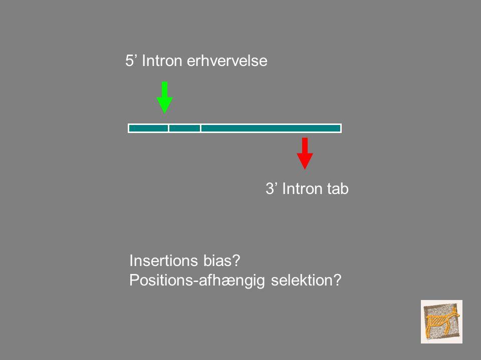 5' Intron erhvervelse 3' Intron tab Insertions bias Positions-afhængig selektion
