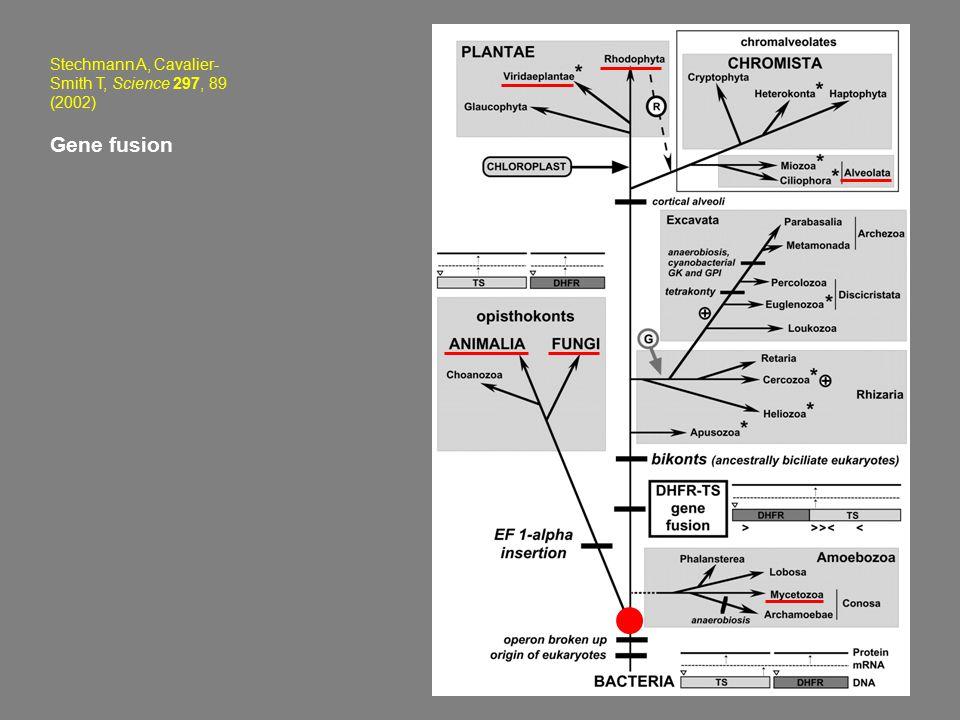 Stechmann A, Cavalier- Smith T, Science 297, 89 (2002) Gene fusion