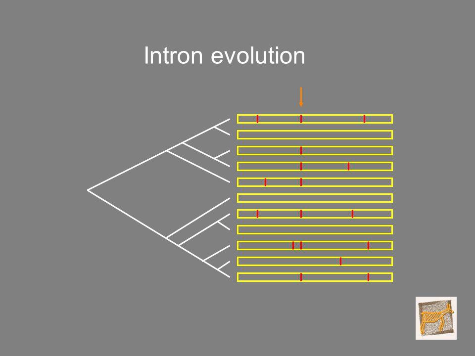 Intron evolution