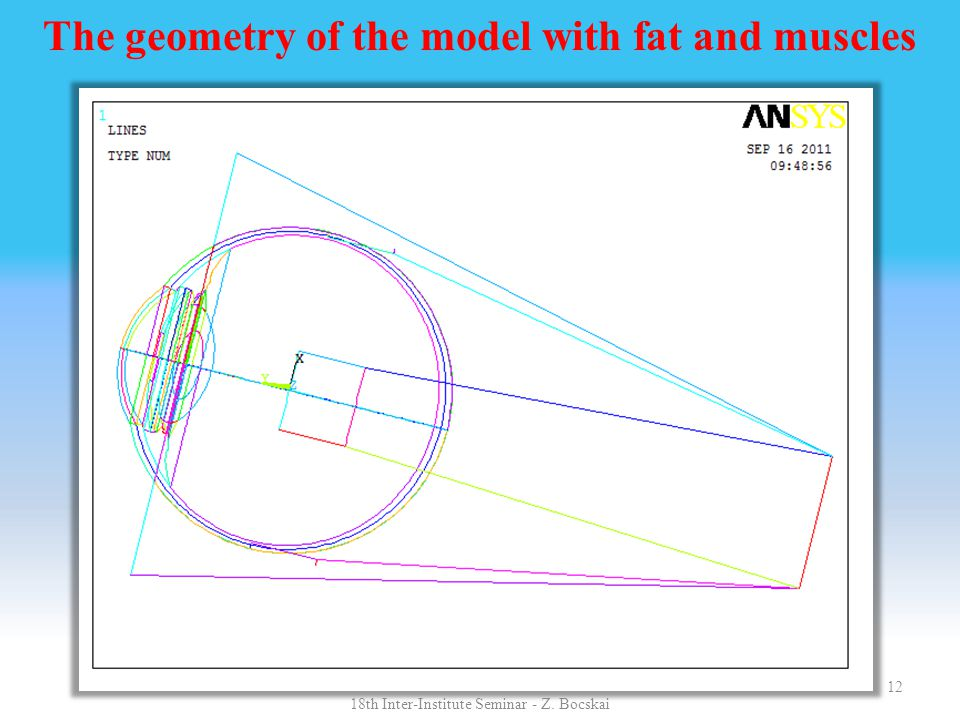 The geometry of the model with fat and muscles 12 18th Inter-Institute Seminar - Z. Bocskai